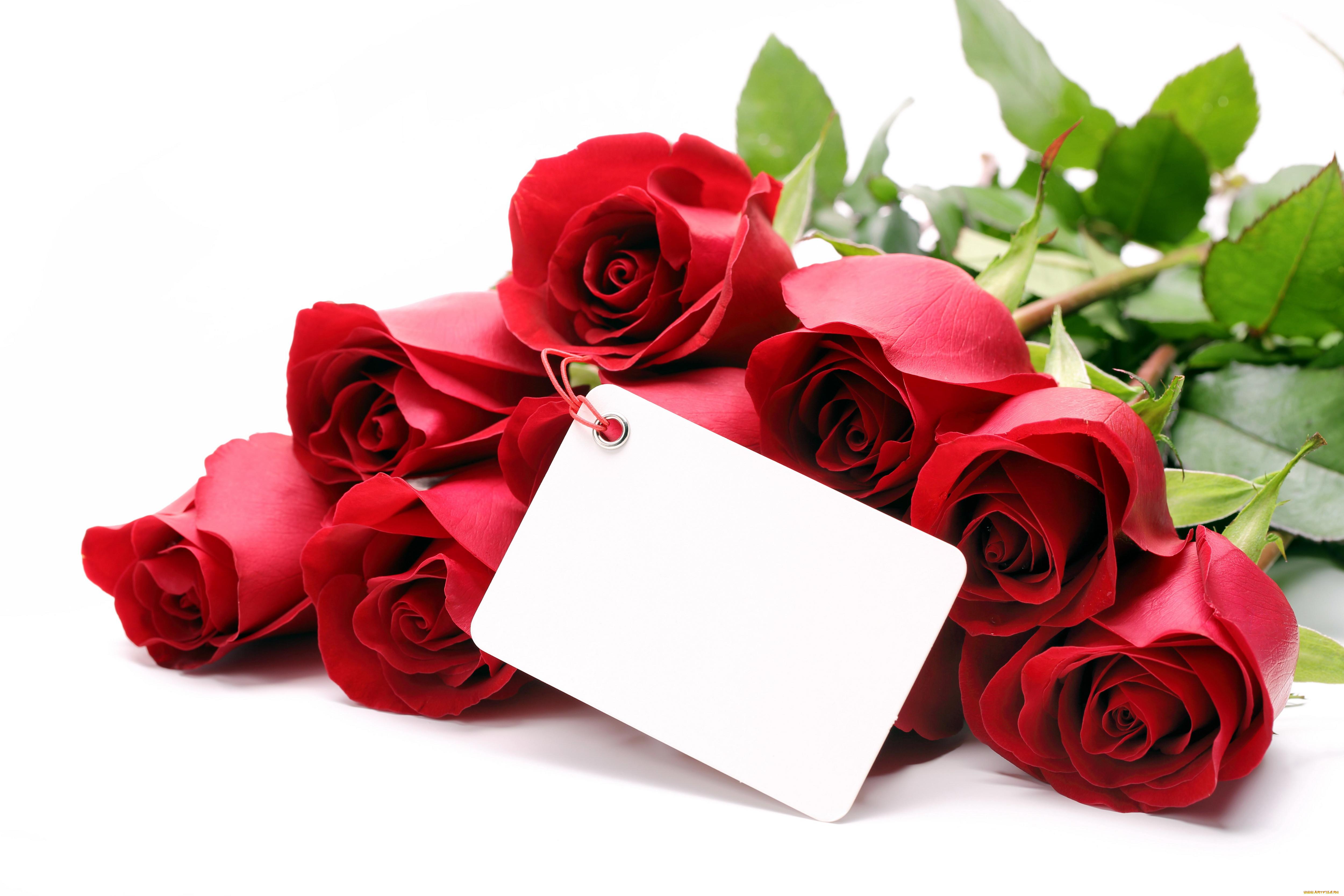 Цветы розы на открытках
